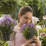 How To Grow Allergy-Free Gardens?