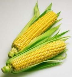 corn allergy1