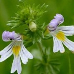 Homeopathic Treatments For Allergies