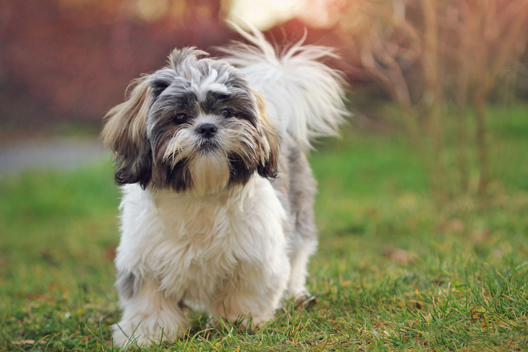 Dog Breeds For Those With Allergies