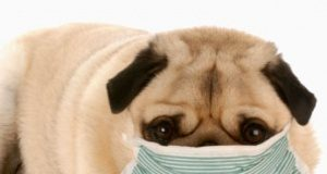 pet allergies myths