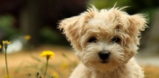 treat pet allergies naturally