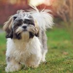 10 Best Dog Breeds for Children With Allergies or Asthma